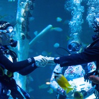 Scuba-diving couple take the plunge with underwater wedding