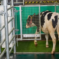 Moos in the loo! Cows potty-trained in bid to tackle climate change