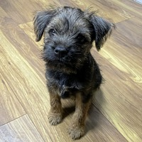 Jake O'Kane: What happened when my adorable Border Terrier turned into a devil dog and bit back...