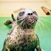 Seal normally found in Arctic waters discovered in Scottish harbour