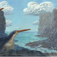 Schoolchildren discover new penguin species