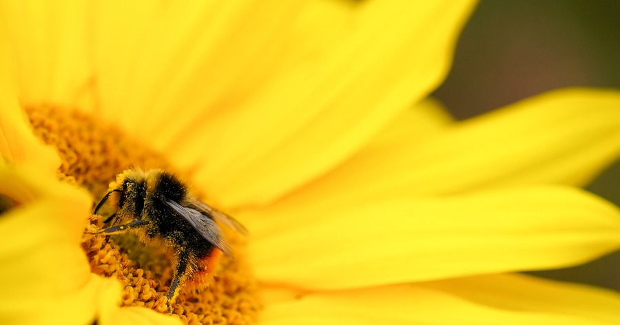 Feeling a spark: Flowers release perfume due to electricity of bee's touch - The Irish News