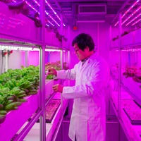 New vertical farms will tackle global food challenges, researchers hope