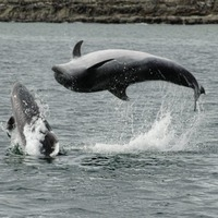No arrests dolphins disturbed at Ballycastle