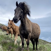 Abandoned horses rescued from National Trust land in Mournes