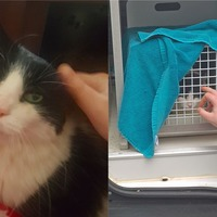 'Over the moon' animal lover reunited with cat seven years after he went missing