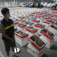Australian lobsters worth £393,000 seized by Hong Kong authorities