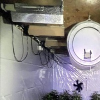 Third man arrested following discovery of £600,000 cannabis factory